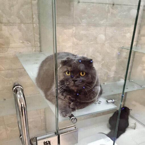 Кошка Соня на отдыхе в отеле для котов и кошек Сказка