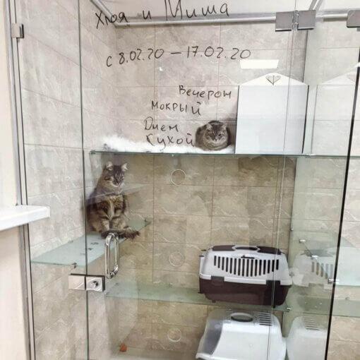 Весёлые котики Хлоя и Миша опять у нас в гостях!