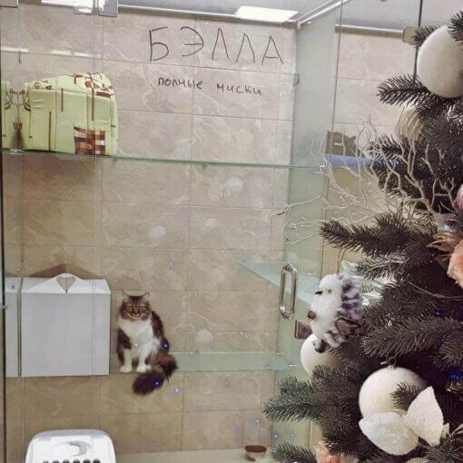 Кошка Бєлла на отдыхе в отеле для котов и кошек Сказка