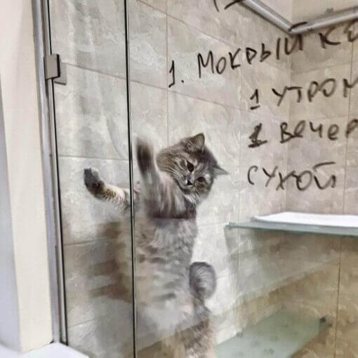 Кошка Фиби на отдыхе в отеле для котов и кошек Сказка