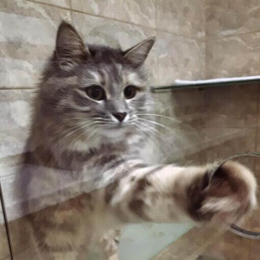 Открывай Хочу гулять Кошка Фиби в отеле для кошек Сказка