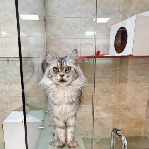 Кошка Нора на отдыхе в отеле для котов и кошек Сказка