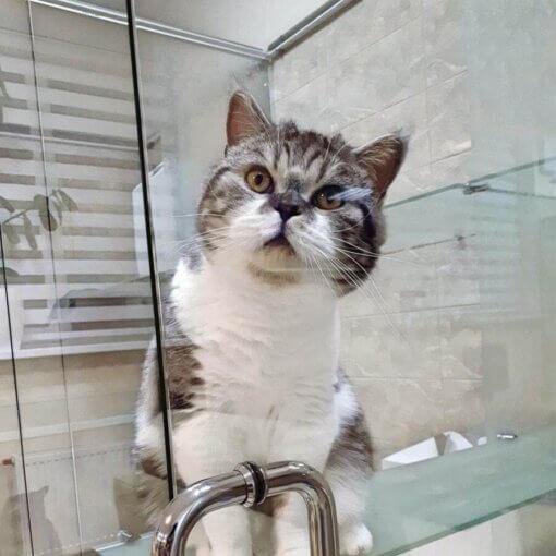 Кот Кирил на отдыхе в отеле для котов Сказка