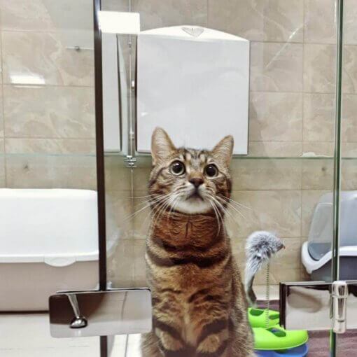 Кот Миша на отдыхе в отеле для котов Сказка