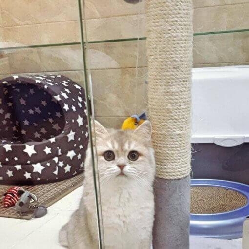 Котёнок Пуся на отдыхе в отеле для котов и кошек Сказка