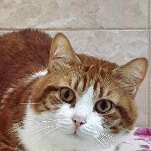 Кот Бусик на отдыхе в отеле для котов и кошек Сказка