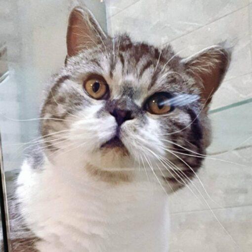 Где оставить кота, кошку на время отпуска?
